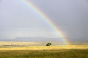 Rainbow over the Mara