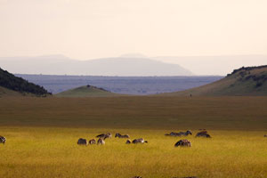 """Out of Africa"" - the Mara"