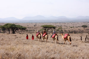 Walking with camels , Lewa Downs