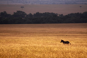 The Mara at its best