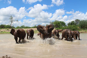 Playtime in the dam at Ithumba