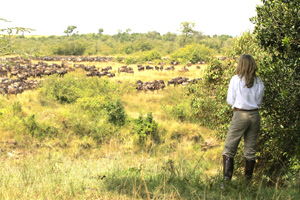 Watching wildebeest herds from camp