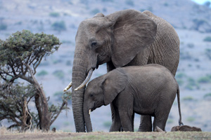 Mum and calf, Lewa
