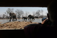 Watching elephants from the hide at Kings Pool, Linyanti