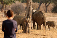 Watching elephanst at Mana Pools